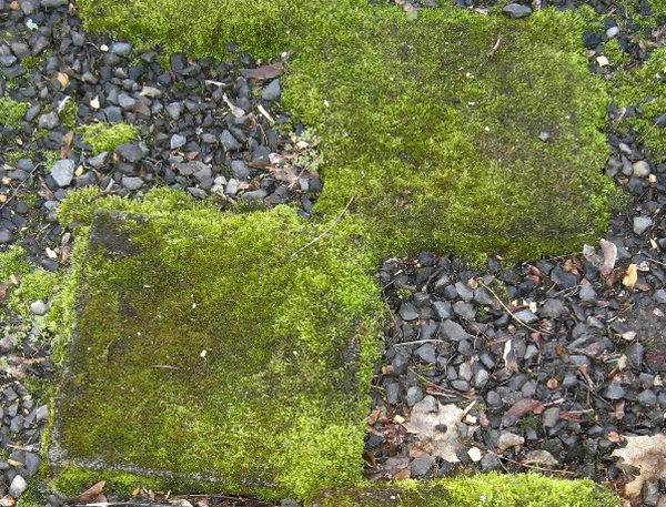 Balmer Moss Stepping Stones. Not only functional but also can be used to decorate your garden. Make the walk in your garden more exciting and fun.