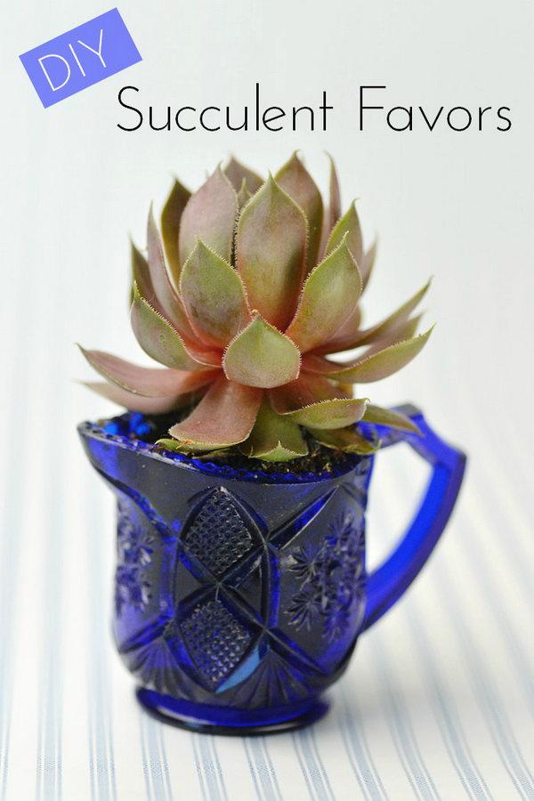 DIY Wedding Succulents in Vintage Glassware