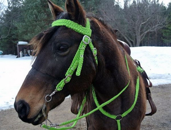 how to make a simple dog halter