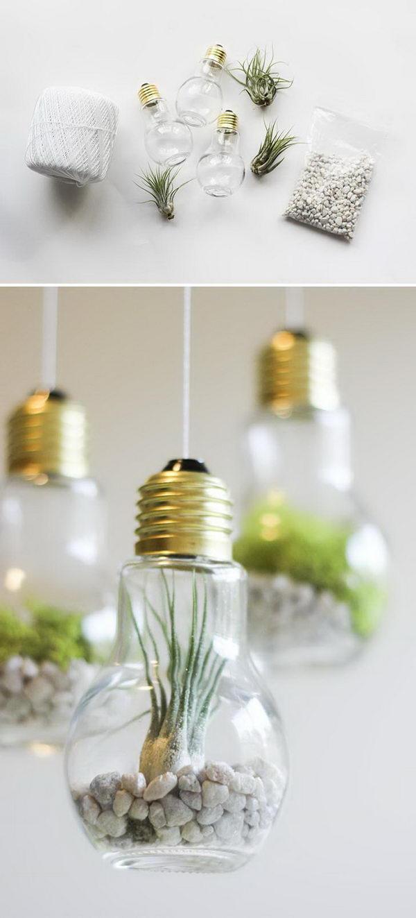 DIY Lightbulb Terrariums.