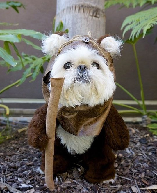 Funny Star Wars Yoda Costume for Dogs.