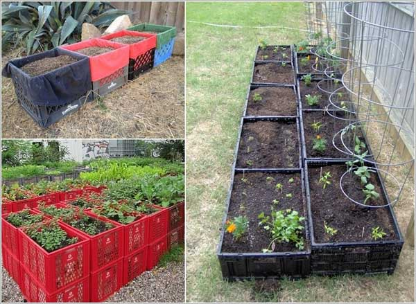 Connect plastic milk crates together to set up a garden bed.