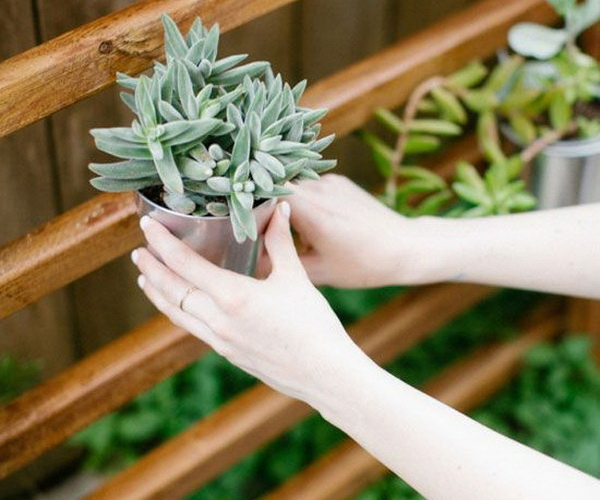 2 succulent garden diy ideas tutorials thumb