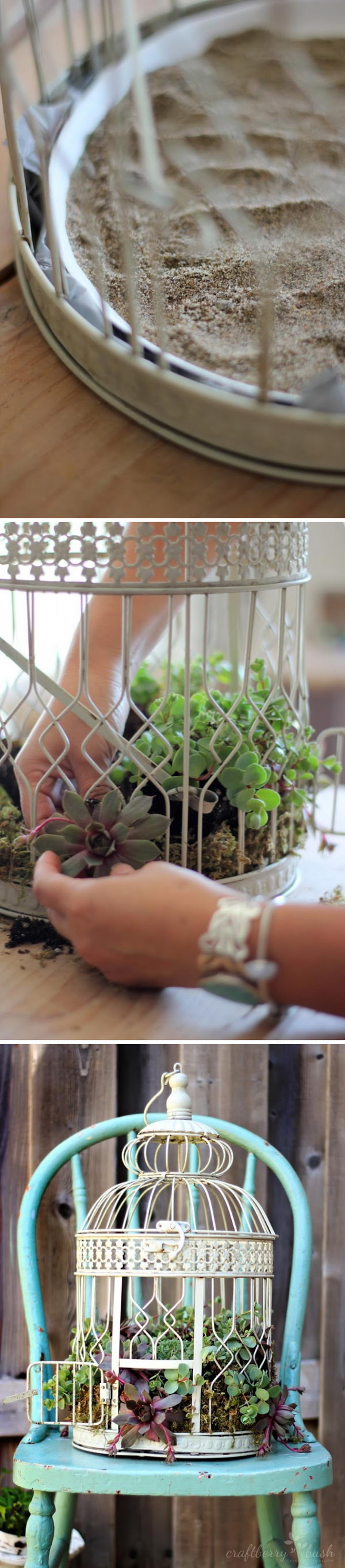 DIY Succulent Bird Cages.
