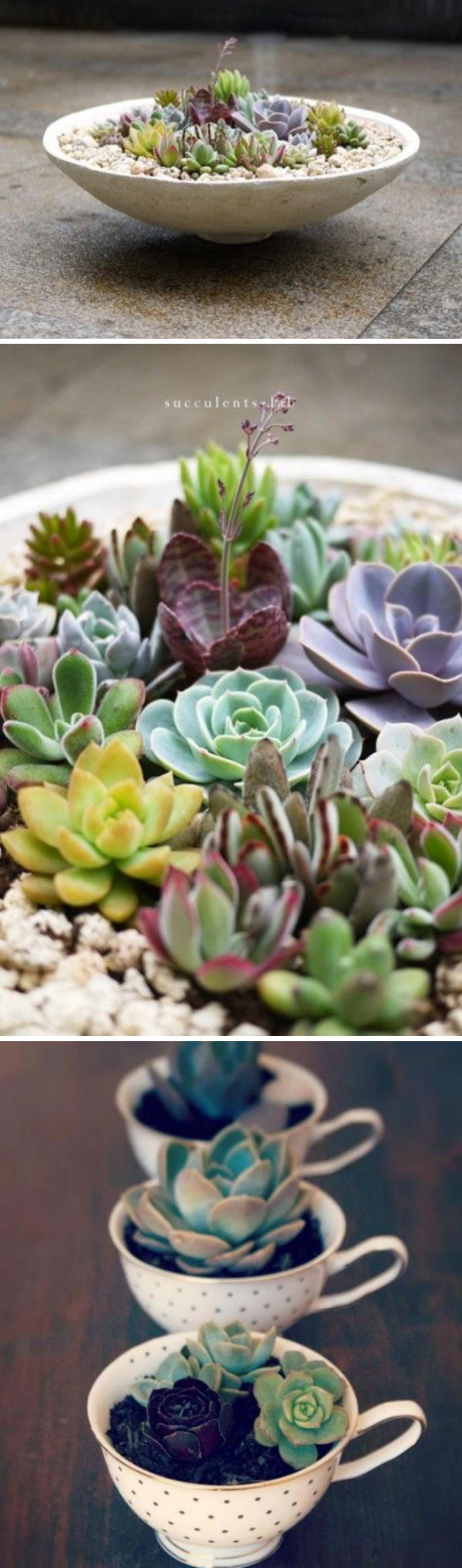 DIY Teacup Succulent Garden.