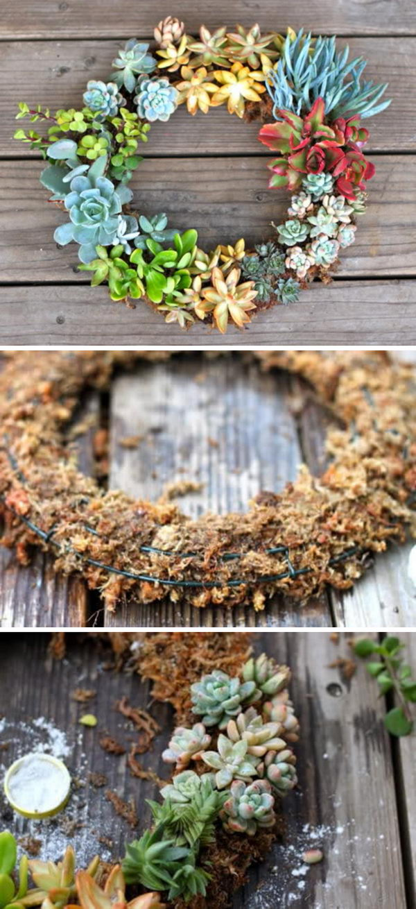 DIY Hanging Succulent Wreath.