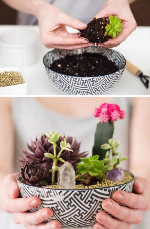 DIY Bowl Succulent Garden.