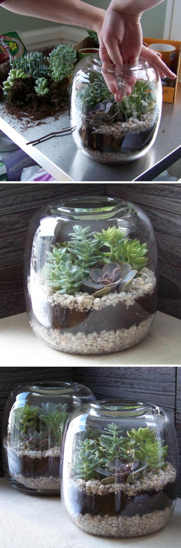 DIY Glass Succulent Terrarium Garden.