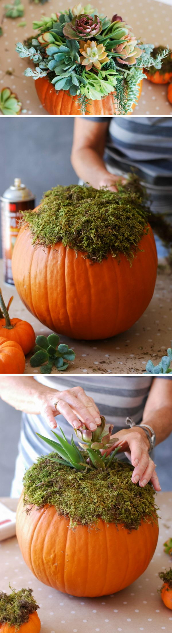 DIY Pumpkin Succulent Centerpiece.