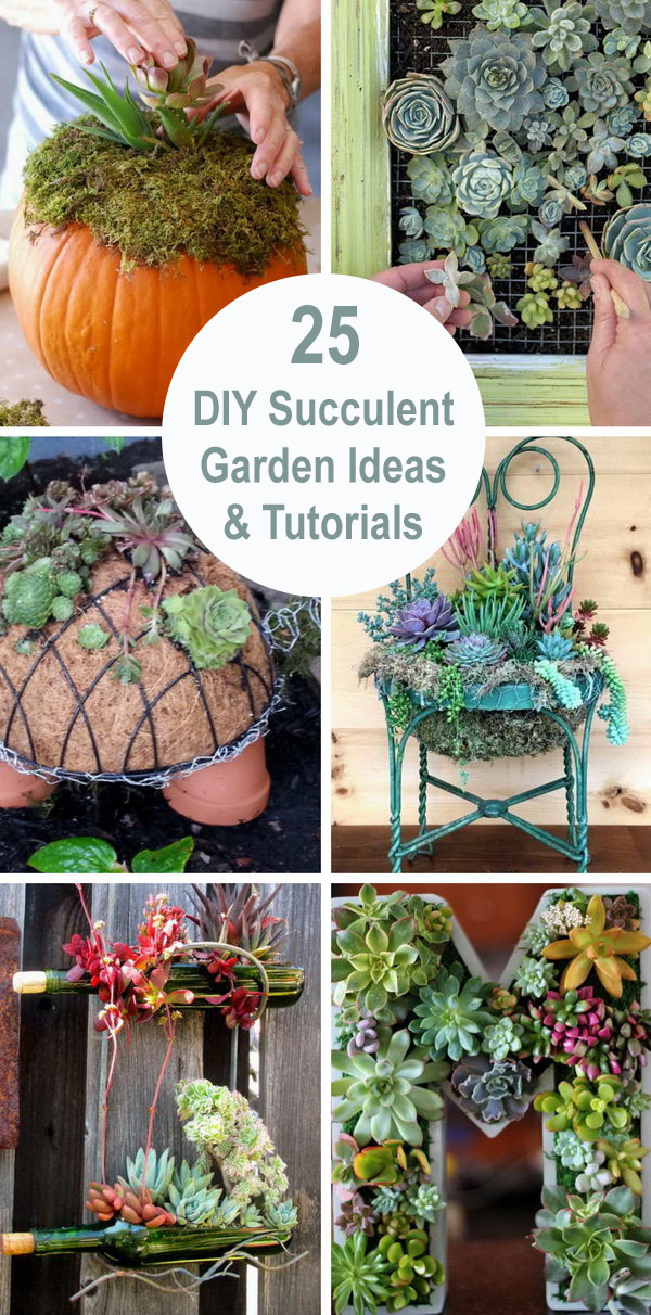25 DIY Succulent Garden Ideas and Tutorials.